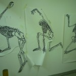 Skeleton drawings