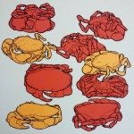 Edible crab drawings